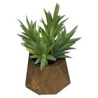 Succulent in wood pot