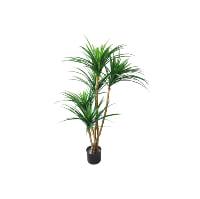 Yucana Tree