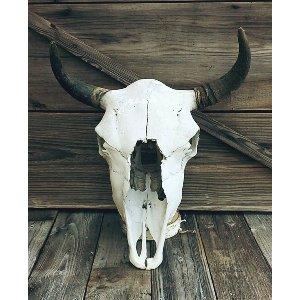 Rustic Cow Skull