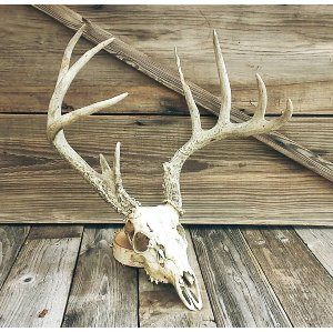 Rustic Deer Skull