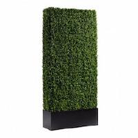 Sub-rental HL Boxwood Hedge