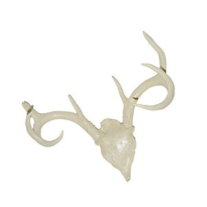 Small Ivory Antlers
