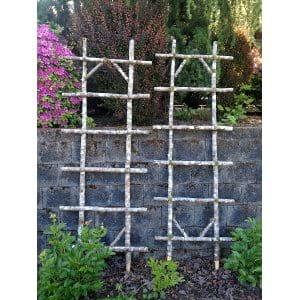 Birch Ladders