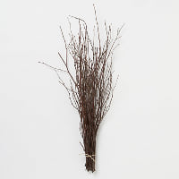 Branch - Twig bunch