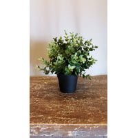 Plant - Potted Artificial Oregano Small