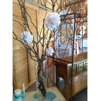 Curly Willow - Set of 3 branches