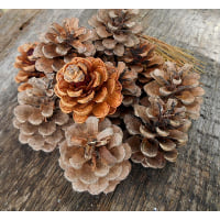 Pinecones - Box of small brown