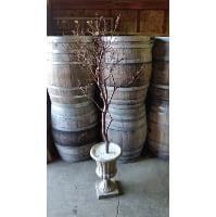 Tree - Manzanita in Urn