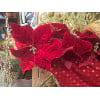 HD37 Poinsettia Garland