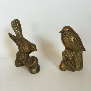 Brass Sparrows