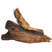 Driftwood Tree Stump