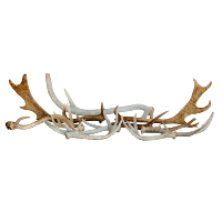 Assorted Wildlife Antlers