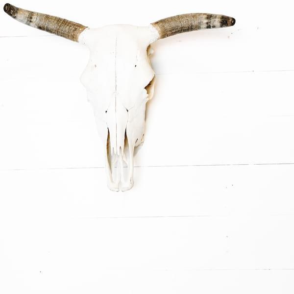 Hilbert Cow Skull