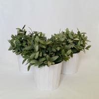 Artificial Plants in Pots