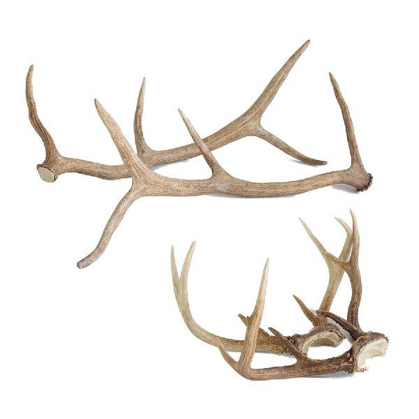 Decorative Antlers