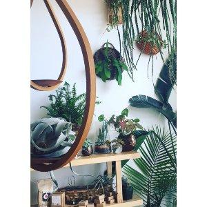 Pa'tier Plant