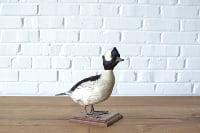 Danny Icebreaker - Taxidermied Duck