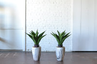 Pair of Faux Potted Agave