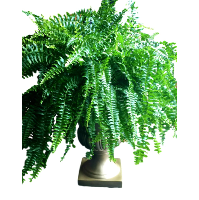Gold Plant Urns (no ferns)
