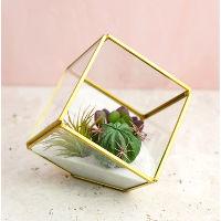 Brass Angled Terrarium Cube