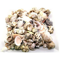 Bag of Small Beach Shells