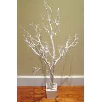 White Rubber Tree