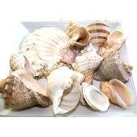 Bag of Large Beach Shells