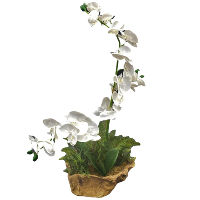 Faux Orchid in Wood Planter