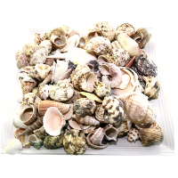 Bag of Small Beach Shells
