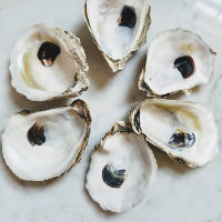 Natural Oyster Shells