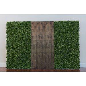 Timberline Fern