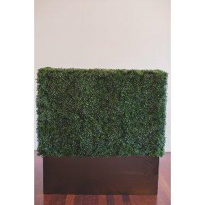 Fern Hedge -4ft
