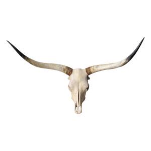 The Lenny: Large Steer Skull