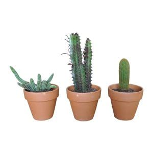 The Assorted Cacti: Tabletop Plant