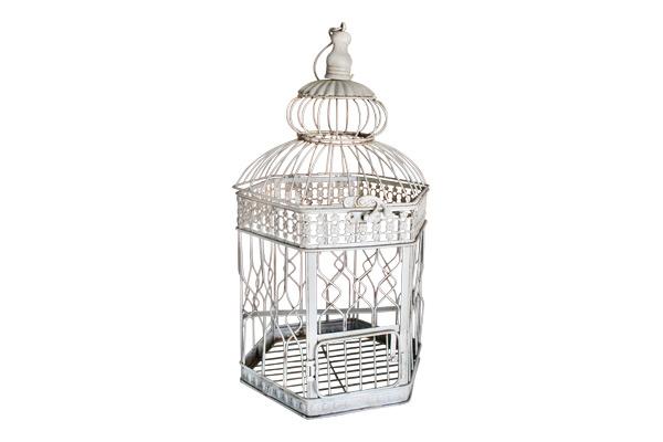 The Avignon: Birdcage