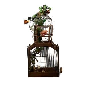 Carly Birdcage