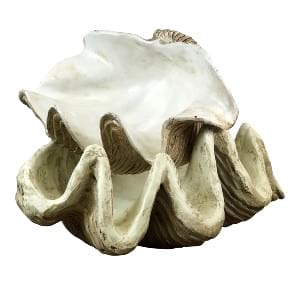 Large Oyster