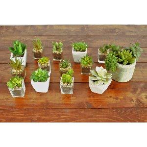 Succulent in Clear Glass