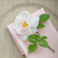 blush napkins | partner company