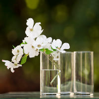 glass cylinder vase B