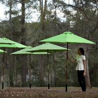 umbrellas market green