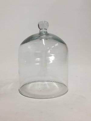 knobbed glass cloche