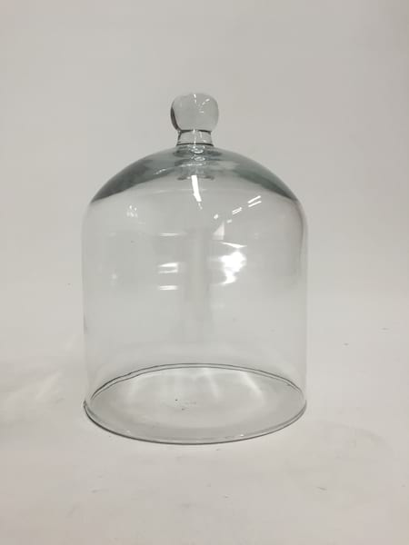 knobbed glass cloche