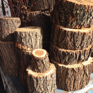 Tree Trunk sections
