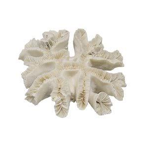 Ribbon Coral
