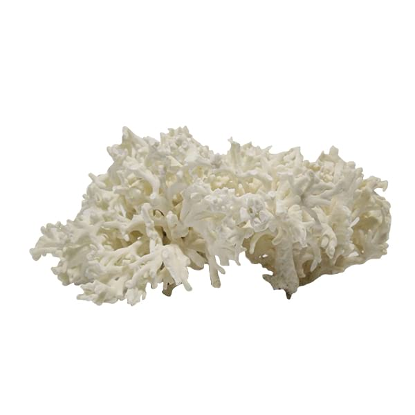 Coral Specimen - Acropora